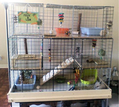 Кролики декоративные содержание в домашних условиях
